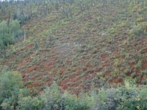 Bewunderten die Farben der Tundra.