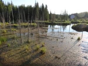 Biber Creek