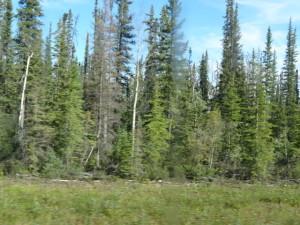 Die Wälder im Norden sind nicht mehr so dicht.