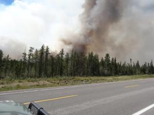 Viel Waldfläche wird jedes Jahr durch Feuer zerstört.