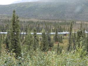 Das Öl fliesst in Pipe Lines vom Norden Alaskas bis Valdez.