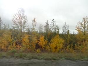 Auf dem Alaska Highway ging es Richtung Kanadische Grenze.