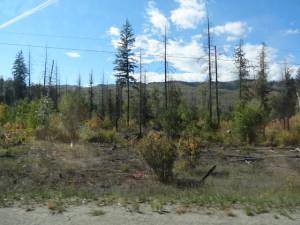 Nach einem Waldbrand geht es lange, bis sich die Natur wieder erholt hat.