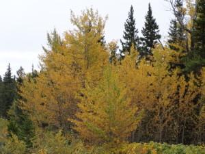 Golden leuchtet der Herbst.