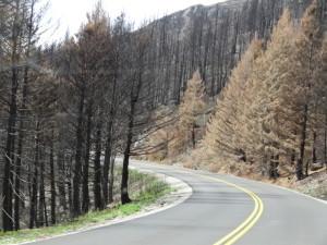 In diesem Sommer gab es hier einen grossen Waldbrand.