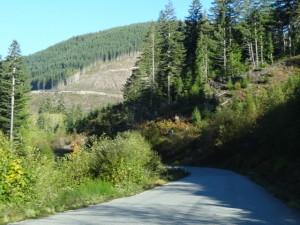 Viel (zu viel) Wald wird abgeholzt.