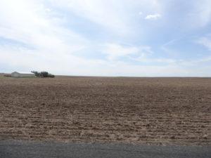 Und bald wird hier Getreide wachsen.