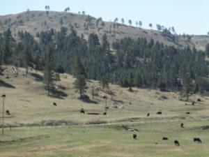 Mit meiner Vorliebe für Western komme ich in Wyoming voll auf die Rechnung: Auf jedem Hügel könnten schon die Indianer stehen, bereit zum Angriff...