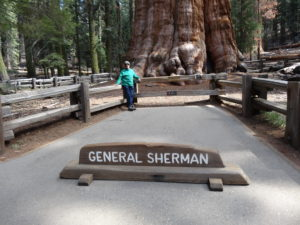 General Sherman tree:
