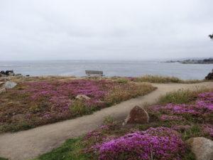 Wir freuten uns aufs Meer. Leider aber war es auch in Monterey kühl und der Himmel bedeckt.