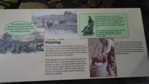 Und informierten uns über den Anbau von Baumwolle in früheren Zeiten.