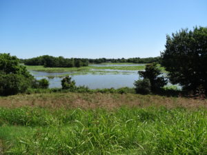 Nach Trockenheit und Wüste war die Fahrt durch Arkansas mit dem vielen Wasser und dem satten Grün eine Wohltat fürs Auge.