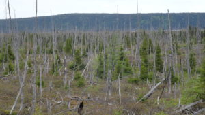 Je weiter nördlich wir kamen umso lichter wurde der Wald