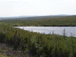 Seen, Wälder